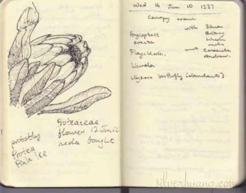 A scanned page from one of Silver's old sketching journals from 2010, featuring a fountain pen field sketch of a what is likely a Protea cultivar flower on the left page, and handwritten field notes of different plant species sighted on the right page.