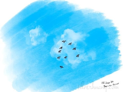 Another screenshot of a page from Silver's digital sketching journal, featuring a field painting of a flock of black and white ibises flying overhead in a rich, blue sky, passing under a large fluffy cloud. There are nine ibises and they are flying in a rough V-formation, and they are so far up in the sky that they are barely specks in the painting, but still recognisable as birds.